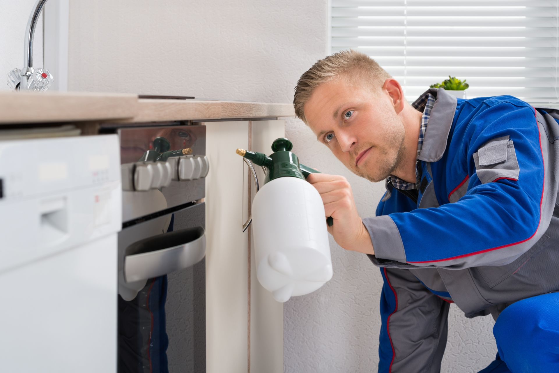 Pest Inspection, Pest Control in Heston, Osterley, TW5. Call Now 020 8166 9746