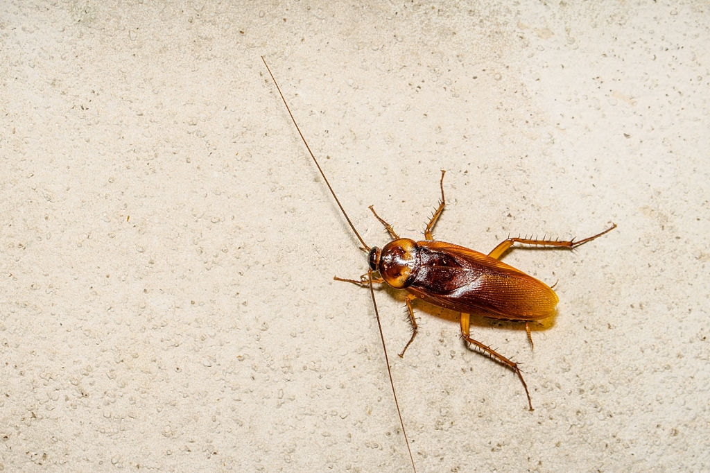 Cockroach Control, Pest Control in Heston, Osterley, TW5. Call Now 020 8166 9746